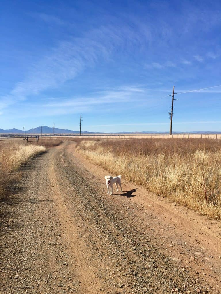 Dog on Dirt Road