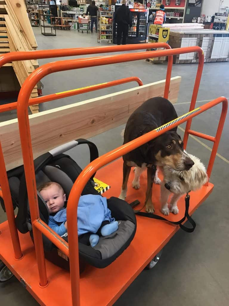 Baby Dogs at Home Depot