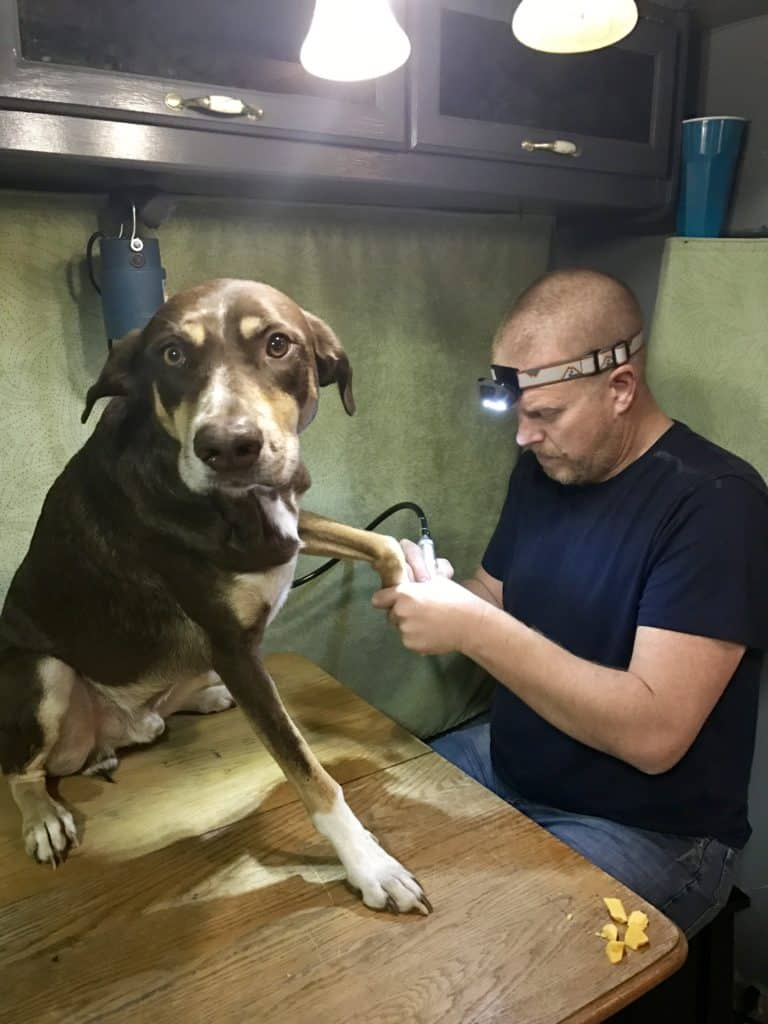 Dog Nail Trimming