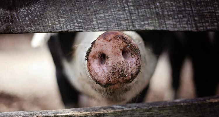Shop with Your Heart for Farm Animals