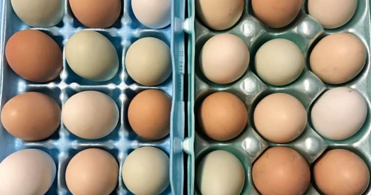 How to Choose an Egg Incubator