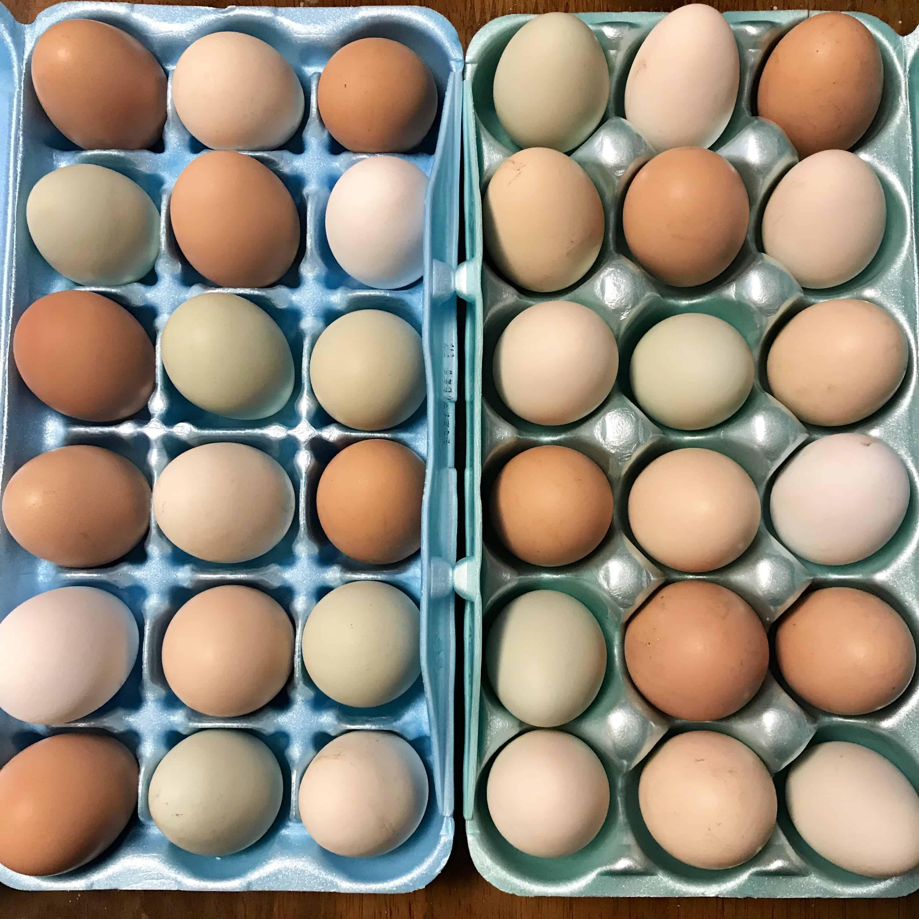 How to Choose an Egg Incubator