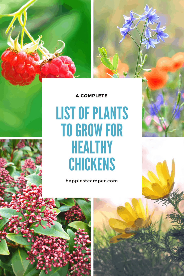 Plants to Grow for Healthy Chickens