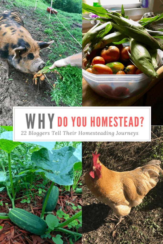 Why Homestead