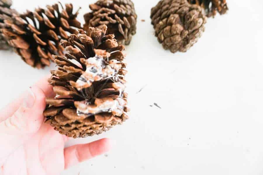 Glue Pinecones