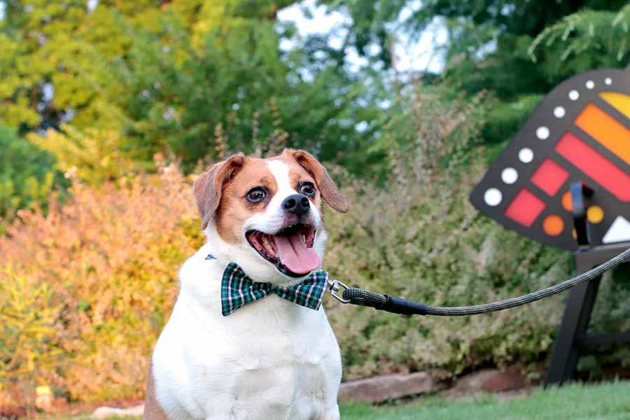 How To Make A Dog Bowtie